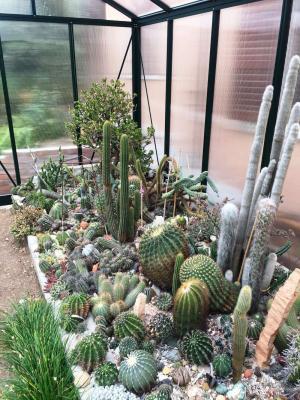 Serra piante grasse - Arcadia