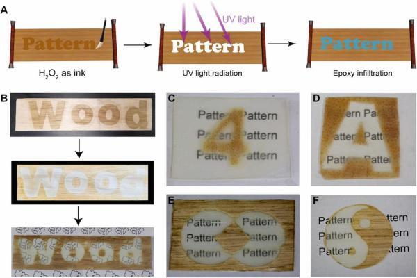 Ci sono diverse ricerche volte ad ottenere il legno trasparente - Science.org