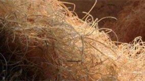 Evoluzione del legno mineralizzato