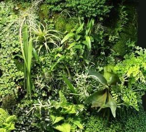 mur vegetal_Blanc