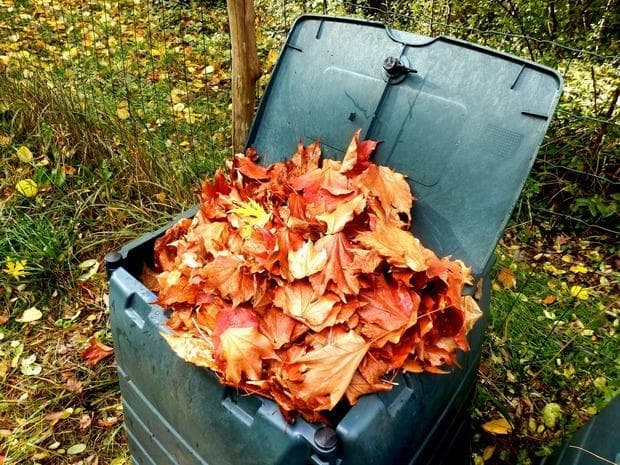 Compostiera e foglie secche