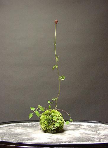 installazione con muschio  e rampicanti. Foto string gardens.