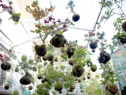 strings gardens_installazione di Fedor.