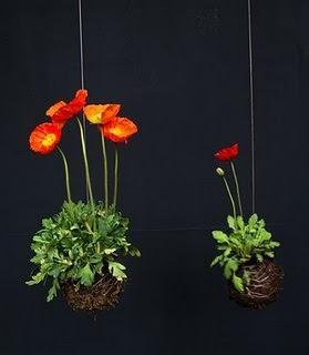 strings gardens-papaveri. Foto string gardens.