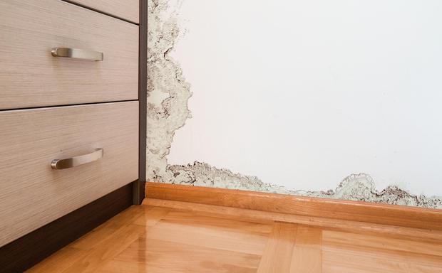 Umidità di risalita sulla parete