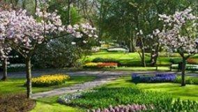 Ciliegi da fiore per piccoli giardini for Alberi piccoli da giardino