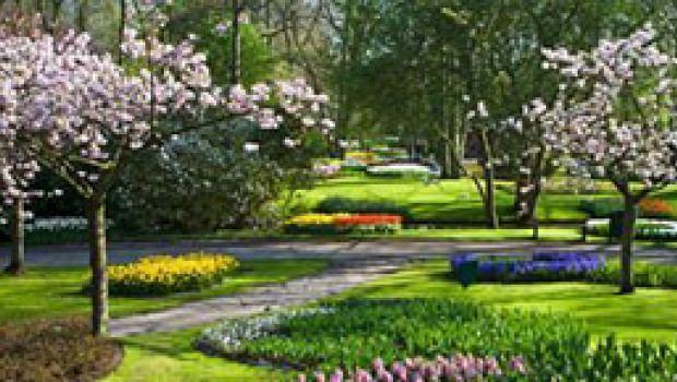 Alberi da giardino - Prezzi alberi da giardino ...