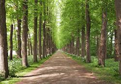 Alberi da giardino: bosco