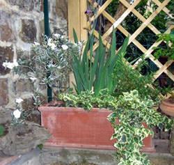 Il Sole Terrecotte: fioriera liscia
