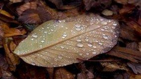 Complementi d'arredo: novità d'autunno