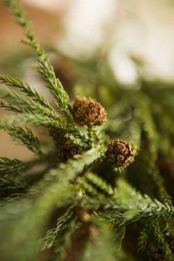 Albero di Natale: cimale