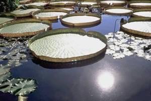 Impianto fotovoltaico galleggiante: Solar lily pad di Glasgow