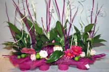 Piante da appartamento: Spathiphyllum