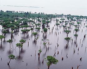 Amazzoni riva del Brasile