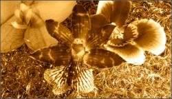 foglie oro