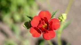 Rose Botaniche