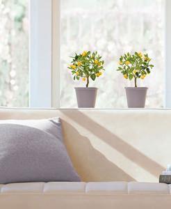 Adesivo per vetri in PVC antistatico