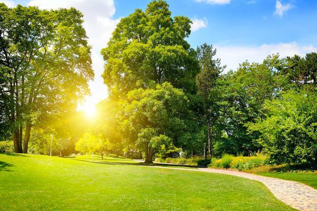 Prateria da giardino: meadow garden