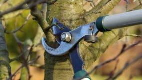 Potatura ed abbattimento di un albero
