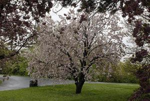 distanze albero in giardino