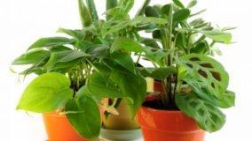 Maggiore comfort in casa con piante ornamentali