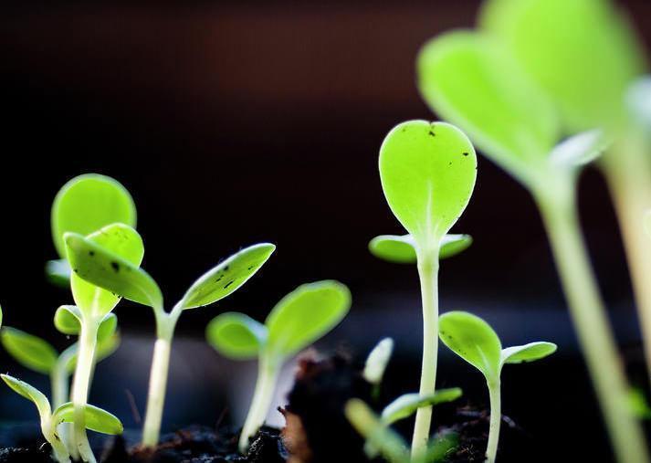 semina e germinazione