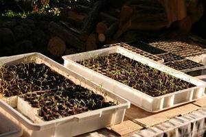 semina in contenitori