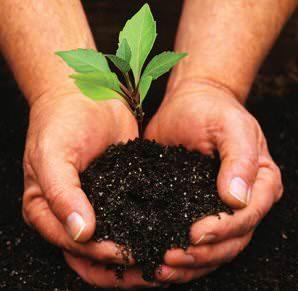 consigli sulla semina