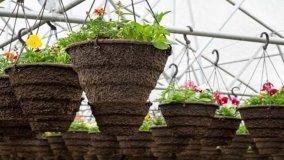 Fioriere da giardino: cosa sapere