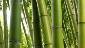 Bambù multiuso