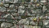Muri in pietra infestati da vegetazione