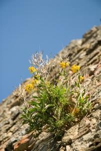 cespuglio cresciuto su muro in pietra