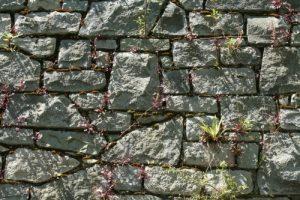 Muro in pietra con piante infestanti