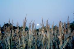 l'influenza lunare è una credenza antica