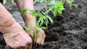 Coltivare un orto sinergico