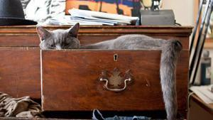 vecchio cassetto di casa con gatto