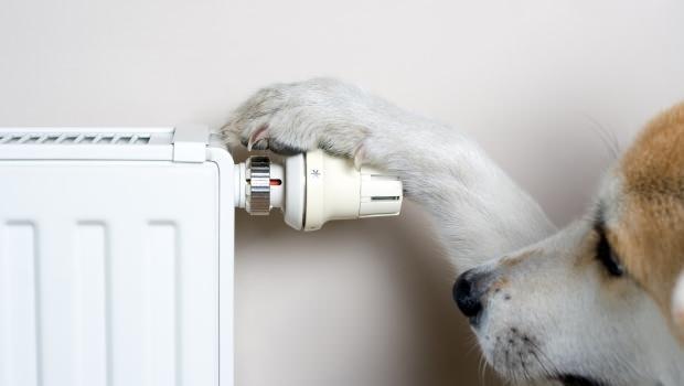 Quando il radiatore arreda for Lideo arreda