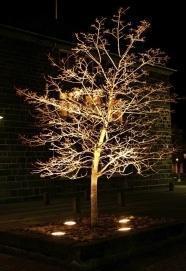 illuminazione albero dal basso