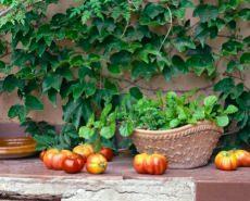 Angolo con rampicante e frutta