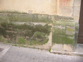 muschio su parte basamentale di un vecchio edificio
