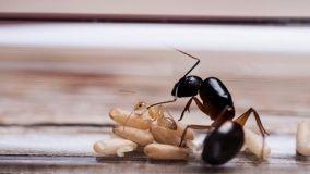 Formiche in casa cosa fare?