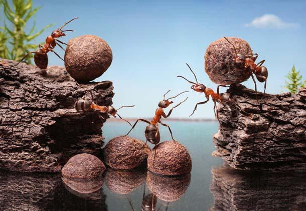 Le formiche sono attratte dai cibi dolci