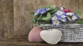 Come curare i  fiori in casa
