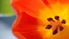 Fiori giardino tra primavera ed estate