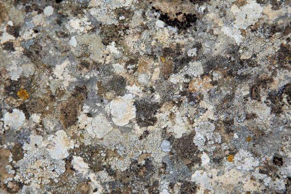 Lichieni e croste sulla superficie di un muretto