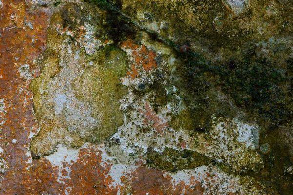 Muschi su superficie murale