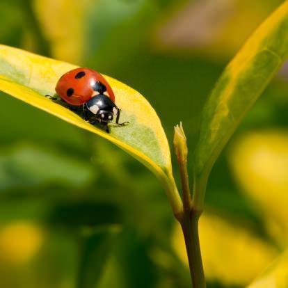 insetti e siepi contro i parassiti