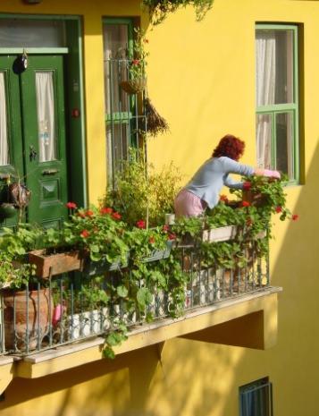 Orto sul terrazzo e ortaggi da piantare - Lavorincasa forum ...