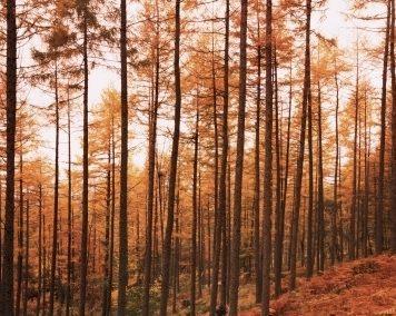 Il recupero degli infissi in legno: La materia prima il pino