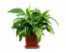 innesti nel momento di massimo splendore della pianta
